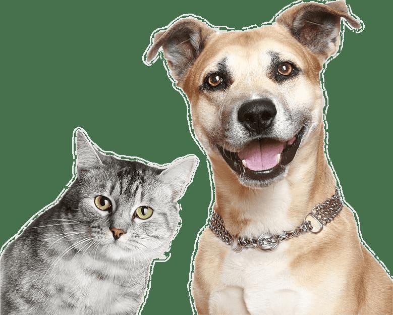 Premium Pet Products